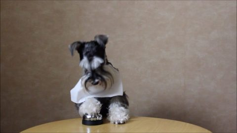 Polite pooch sits at table with napkin tucked in collar and rings bell for treats served on plate