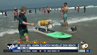 Dogs will learn to catch waves at dog beach