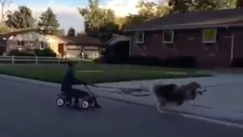 Dog makes a run for it after his pulling owner in wagon