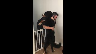 Bernese Mountain Dog gives owner epic hug