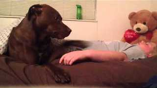 Service Dog Responds to Pass Out Spell - Video