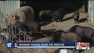 Woman taking over pig rescue