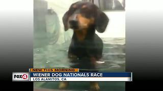 Weiner Dog Nationals Race - Video