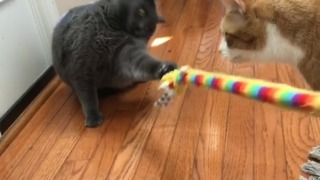 Fluffy cat refuses to let go of toy  - Video