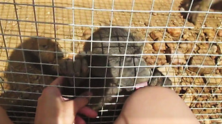 Adorable rescued baby baboon interacting with caretaker - Video