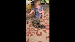 Baby Girl Abrupted by Cat Interupted