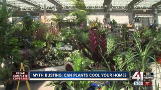 Addressing truths and myths of house plants - Video
