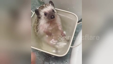 This hedgehog absolutely adores bath time