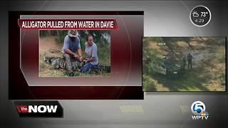 Woman possibly dragged into water by alligator in Davie - Video