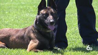 Two Meridian PD K-9's carry more than just their badges, they're carrying legacies