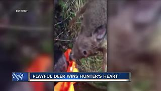 Janesville hunter's encounter with friendly buck goes viral - Video