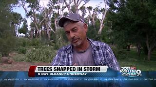 Monsoon snaps more than 30 trees in half - Video