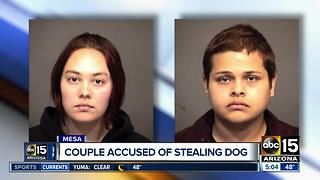 Groomer, boyfriend arrested for stealing dog from Mesa salon - Video