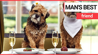 Brits would choose the company of their pets over their friends - Video