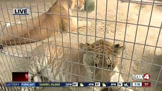 Octagon Wildlife Sanctuary rescues threatened, abused animals -- 7am live report - Video