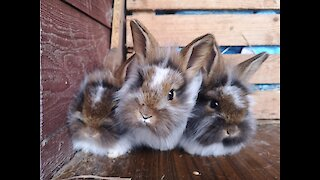 you won't believe what these rabbits do