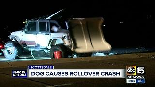 Runaway dog causes rollover crash in Scottsdale - Video