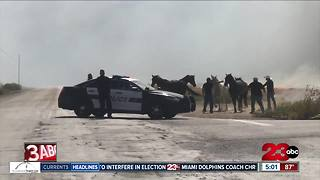 Dramatic video of horses escaping fire in southeast Bakersfield - Video