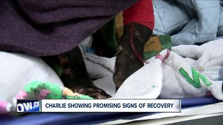 Charlie the dog doing well - Video