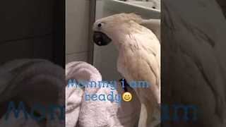 Quirky Cockatoo Enjoys Time in the Shower - Video