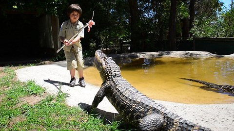 Eight-Year-Old Gator Wrangler Handles Beasts With Ease
