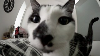 What it's like to be woken up by a cat - Video