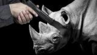 Auction to Kill Black Rhino - Video