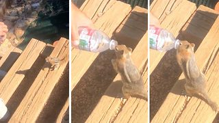 Bizarre footage chipmunk drinks from water bottle like a human - Video