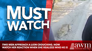 Two Men Approach A Lion Crouching. Now Watch Her Reaction When She Realizes Who He Is - Video