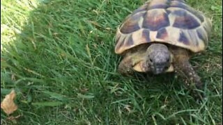 Meet Timmy: the turtle with anger issues