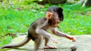 Cute Baby Monkey Polly Want To Play