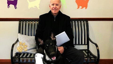 BIDEN REAKS FOOT PLAYING EXTREME GAME OF FETCH!
