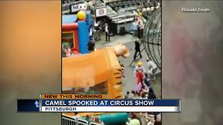 Spooked camel bucks while being ridden at circus, injuring 7 in Pittsburgh