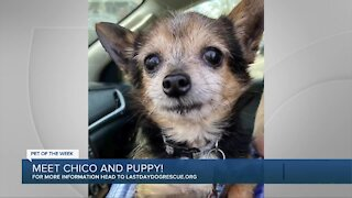 Meet Chico and Puppy - Our Pet of the Week!