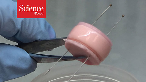Watch these tissue engineered spinal discs mimic the real thing