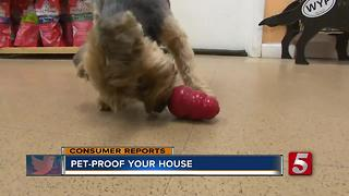Learn How To Pet-Proof Your House - Video