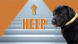 Doggy Overcomes Fear of Stairs - Video