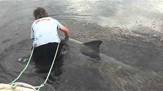 Man Saves Distressed Dolphin Trapped In Heavy Seaweed - Video