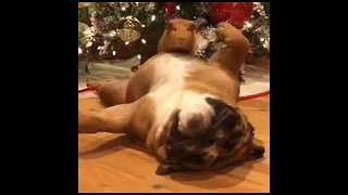 Adorable Pets Show Off Their Christmas Spirit - Video