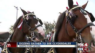 Dozens Gather to see Clydesdales - Video