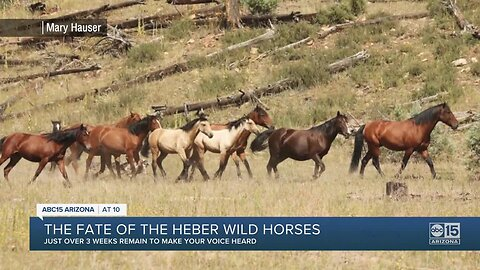 March deadline for public comment on the fate of Heber wild horses