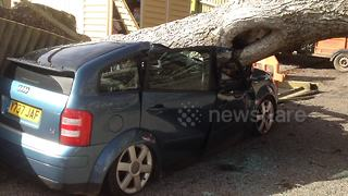 Tree crushes two cars in Cornwall, UK - Video