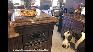 Great Dane Checks Out Breakfast Pizza With Timmie's Coffee