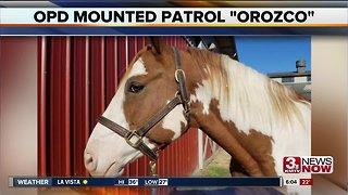 Omaha Police horse named after Kerrie Orozco