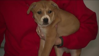 Animal shelters in desperate need for foster families
