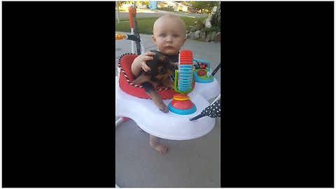 Puppy joins baby in baby bouncer