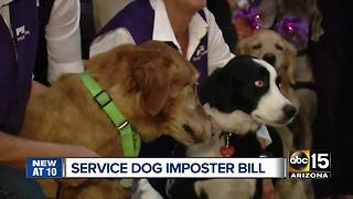 Arizona lawmaker wants to fine fake service pet owners - Video
