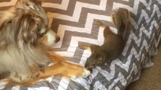 Dog and squirrel share unique friendship - Video
