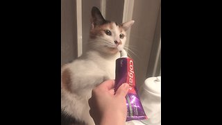 Cat smells toothpaste, humorously attacks it