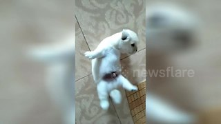 Cute puppy fail: Little pooch gets stuck on its back